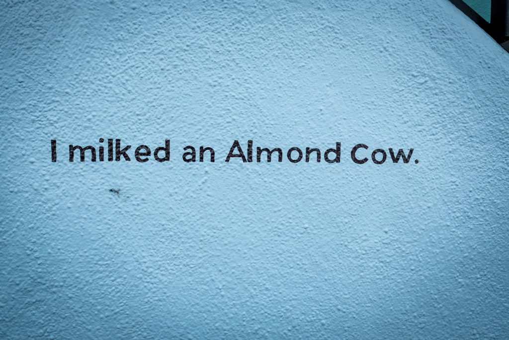 I milked an almond cow